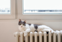 Domestic Cat Resting On A Hot Radiator Under The Window