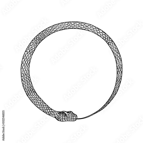 Circle snake in Vintage style. Serpent cobra or python or poisonous viper. Engraved hand drawn old reptile sketch for Tattoo. Anaconda for sticker or logo or t-shirts. Wall mural