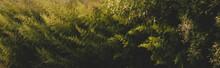 Conjunto De Plantas Verdes Con...