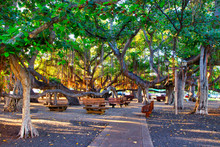 The Famous Banyan Tree On Fron...