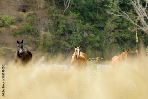 Photo  horses in a stable in Colombia