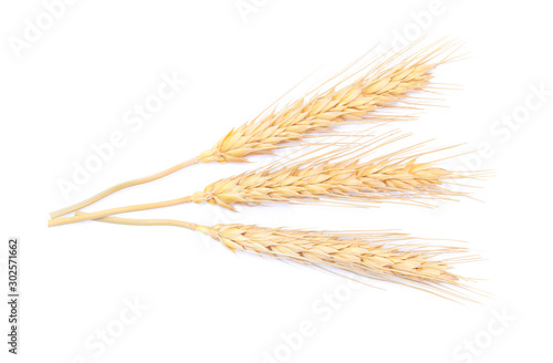 Ear of barley rice on white background Canvas Print