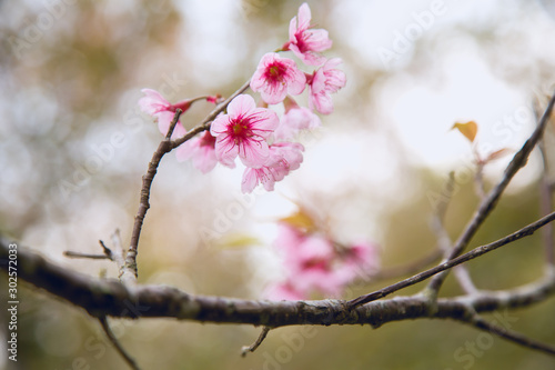 Photo Beautiful cherry blossom or sakura in spring time over  sky