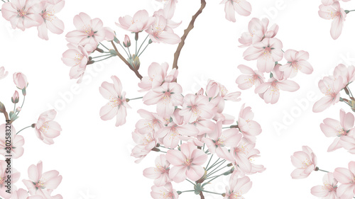 Floral seamless pattern, Somei Yoshino sakura flowers with branch on white