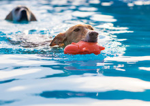 Dogs Playing And Swimming In T...