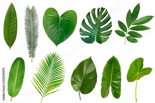 Fototapety, obrazy: Set of Tropical leaves isolated on white background.
