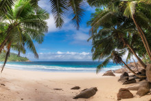 Coconut Palm Trees On Exotic Paradise Beach. Summer Vacation And Tropical Beach Concept.