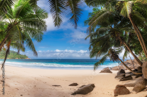 Obraz Coconut palm trees on exotic paradise beach. Summer vacation and tropical beach concept. - fototapety do salonu