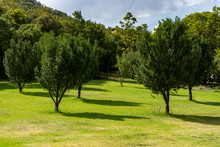 Open Picnic Area With Trees An...