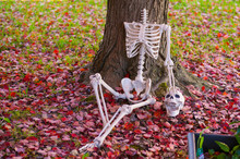 Headless Halloween Skeleton Prop Decoration, With Hand On Skull, Leaning Against A Tree Trunk With Leaves On The Ground In Autumn