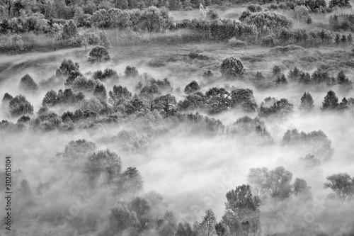 Fototapeta The foggy forest (Black and white photography) obraz