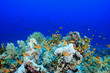 canvas print picture - Coral Reef at the Red Sea, Egypt