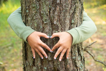 Child's Hands Making A Heart Shape On A Tree Trunk