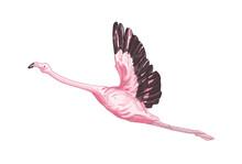 Flying Flamingo Vector Illustr...