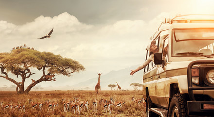 Happy woman traveller on a safari in Africa, travels by car in Kenya and Tanzania, watches life wild tigers, giraffes, zebras and antelopes in the savannah.