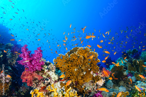 Fotografering Coral Reef at the Red Sea, Egypt