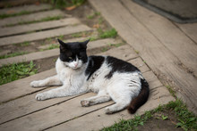 Rustic Cat Resting In The Fresh Air In The Yard Of A Private House