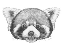 Portrait Of Red Panda. Hand-drawn Illustration. Vector Isolated Elements.