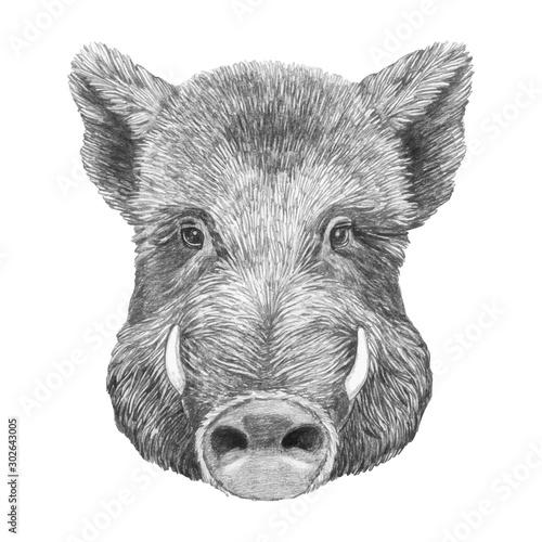 Canvas Portrait of Boar