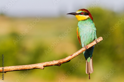 exotic colorful bird sitting on a dry branch Canvas Print
