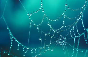 Spider web covered in morning dew drops, beautiful in cold winter morning colorful beautiful teal