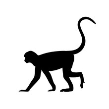 Silhouette Of Monkey. Animal Genus Of Primates