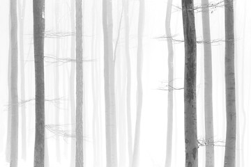 Black and white photo of winter snowy forest, bare tree trunks, foggy background