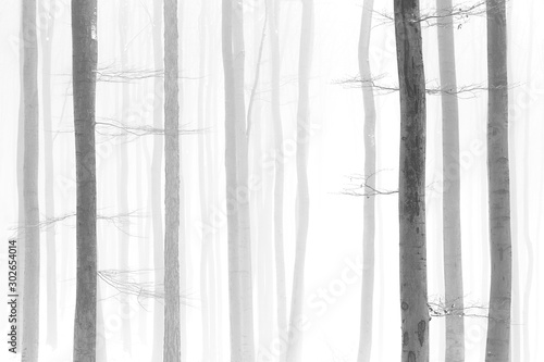Black and white photo of winter snowy forest, bare tree trunks, foggy background Fototapeta