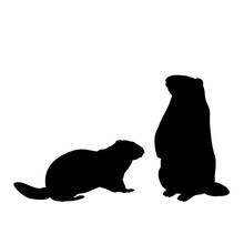 Silhouette Of Two Groundhog Marmot. Animals Family