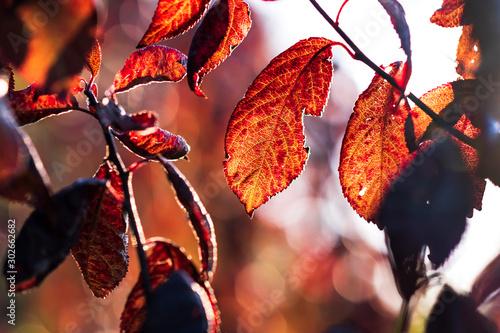 Foto auf AluDibond Ziegel Closeup of beautiful red autumn leaves. concept of Fall. selective focus.
