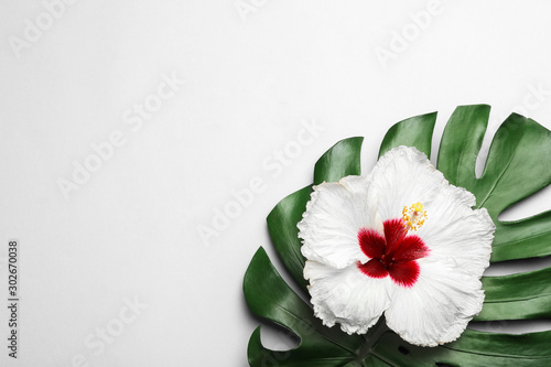 Fotografía  Beautiful tropical hibiscus flower and monstera leaf on white background, flat lay