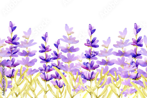 Seamless pattern border with sprigs of lavender flowers in the field on the meadow Fototapet