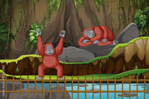 Spoed Foto op Canvas Kids Scene with two monkeys in the zoo