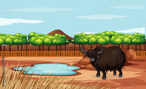 Poster Jeunes enfants Scene with buffalo in the open zoo