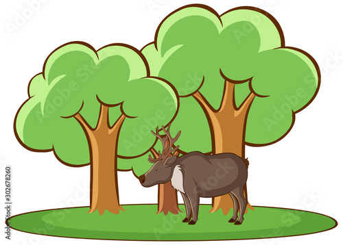 Poster Jeunes enfants Isolated picture of deer in the forest
