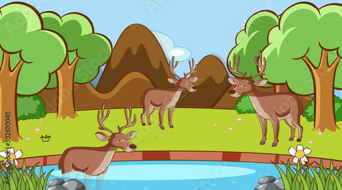 Foto op Plexiglas Kids Scene with deers in the forest