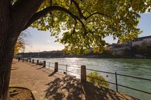 Tree On The River Basel Switzerland
