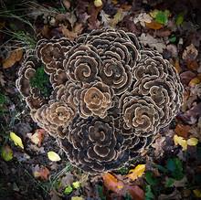 Bouquet Of Mushrooms In Autumn...