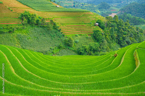 Beautiful terraced rice paddy field and mountain landscape in Mu Cang Chai and SAPA VIETNAM Sunlight and flare background concept.