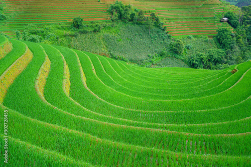 Autocollant pour porte Les champs de riz Beautiful terraced rice paddy field and mountain landscape in Mu Cang Chai and SAPA VIETNAM Sunlight and flare background concept.