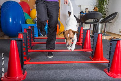 Fotomural  Hund springt über Hindernisse