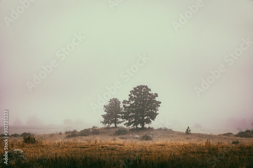 Fotografie, Tablou  Foggy Afternoon at Wyoming's Vedauwoo