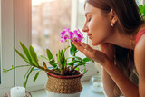 Woman smelling dendrobium orchid on window sill. Housewife taking care of home plants and flowers.
