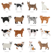 Short Tail Type Bob Cats. Domestic Cat Breeds And Hybrids Collection Isolated On White. Flat Style Set.