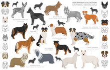 Shepherd And Herding Dogs Coll...