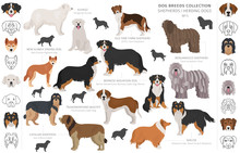 Shepherd And Herding Dogs Coll...