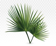 3d Realistic Green Palm Leaves...