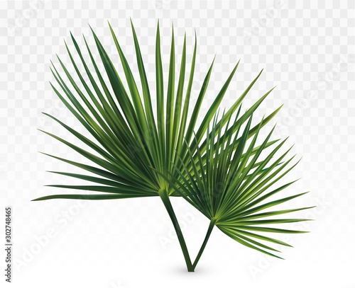 3d realistic green palm leaves Wallpaper Mural