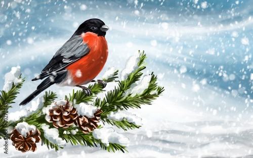 bird bullfinch on a branch of spruce on a winter background, art illustration pa Fototapet