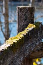 Green Moss On Split Rail Fence